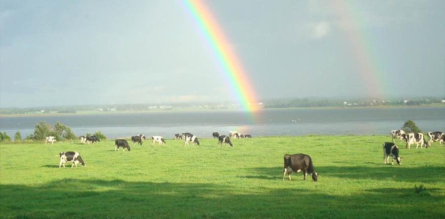 Dairy Isle Farms